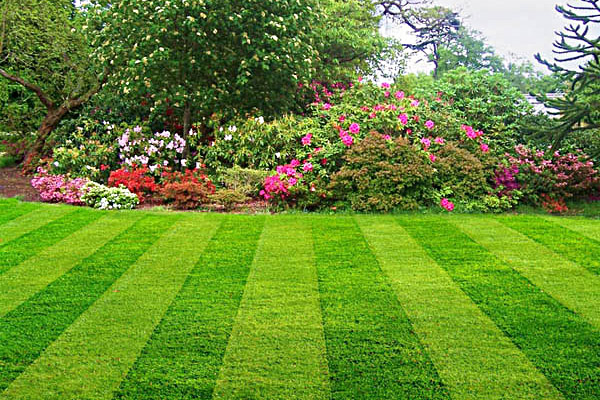 Lawn Mowing Knoxville Tennessee Landscaper