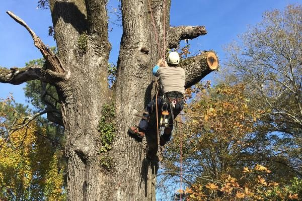 shreveport tree service